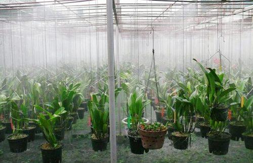 Hệ thống phun sương tại vườn lan